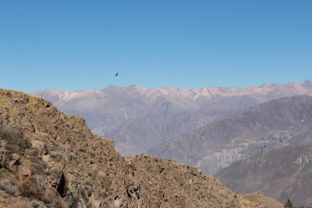 Colca Canyon Condor Cross