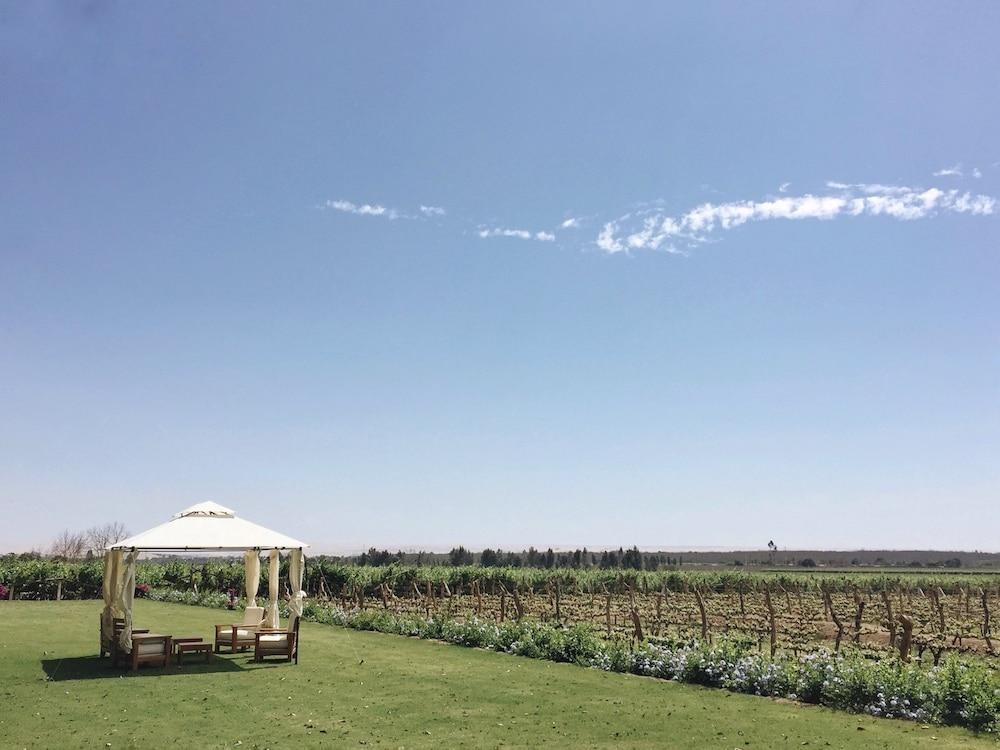 Tacama Winery, Ica, Peru