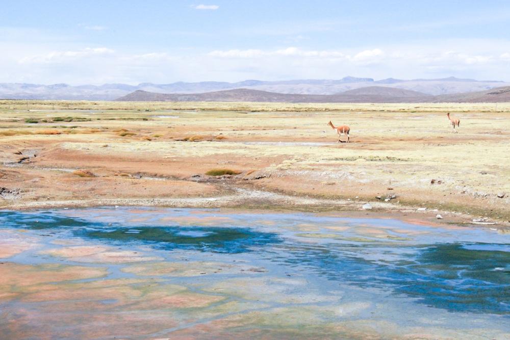 salinas-y-aguada-blanca-national-reserve-1-of-1
