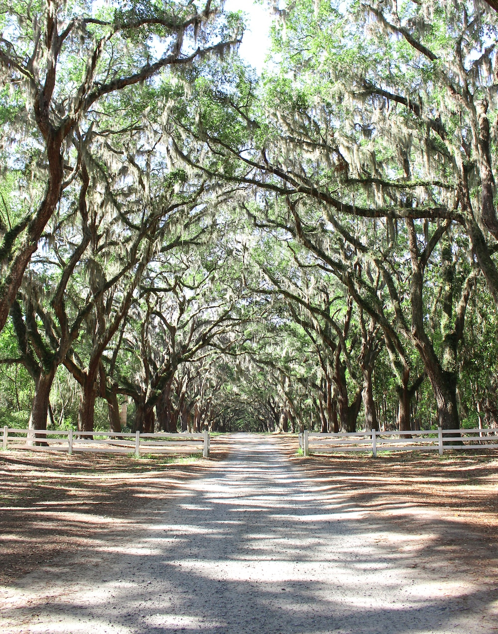 8 reasons why savannah is one of the best places to travel in the