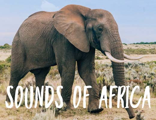 Travel Playlist: Sounds of Africa