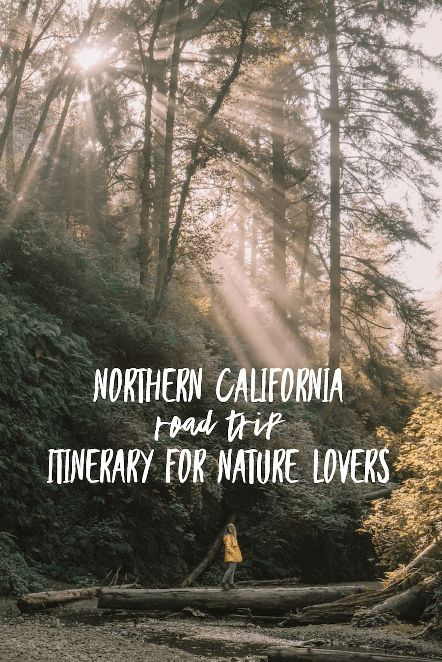 Ultimate Northern California Road Trip Guide