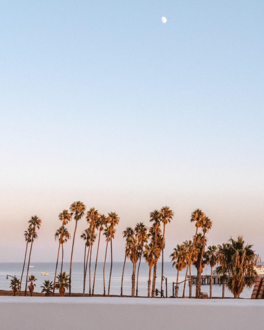 Palm trees lined up along the Santa Barbara coastline