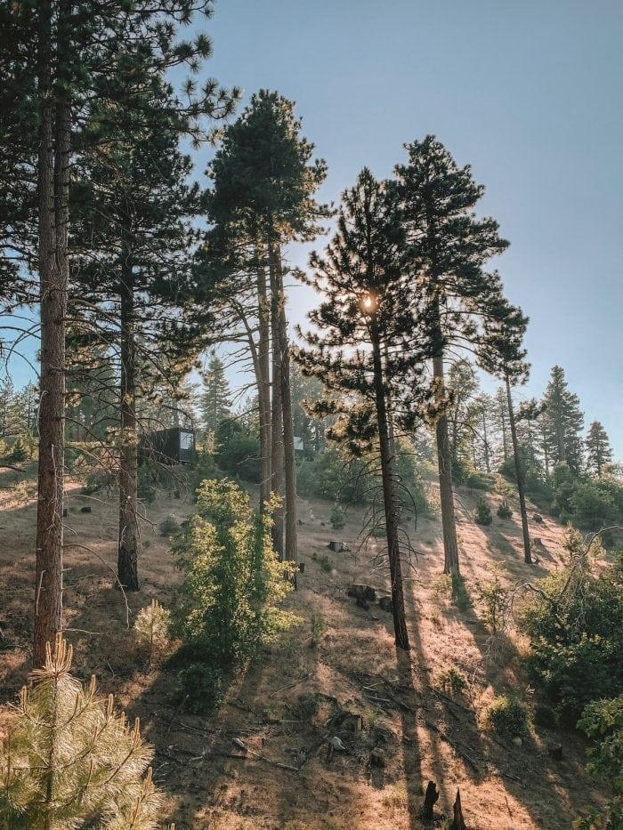 Getaway cabins hiding amongst the trees in Big Bear