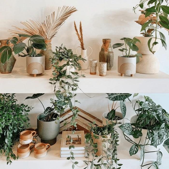 planters ceramics from Nikau store