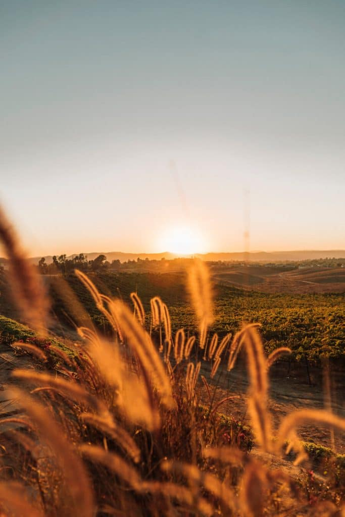 Sunset at Callaway Winery