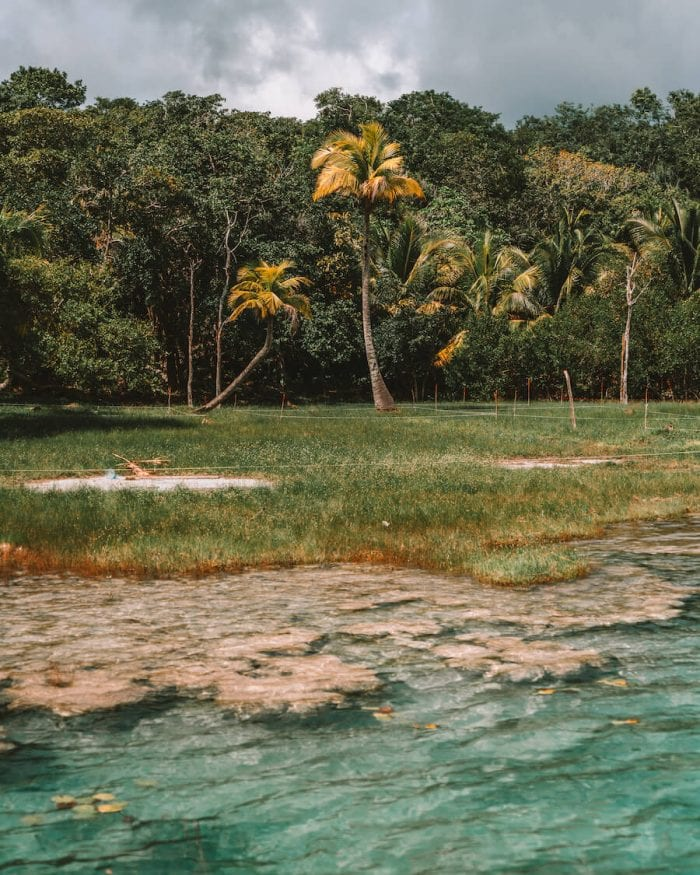Stromatolites in Bacalar