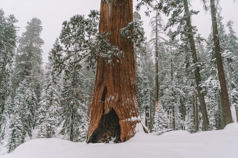 Weekend Getaways from Los Angeles - Sequoia National Park