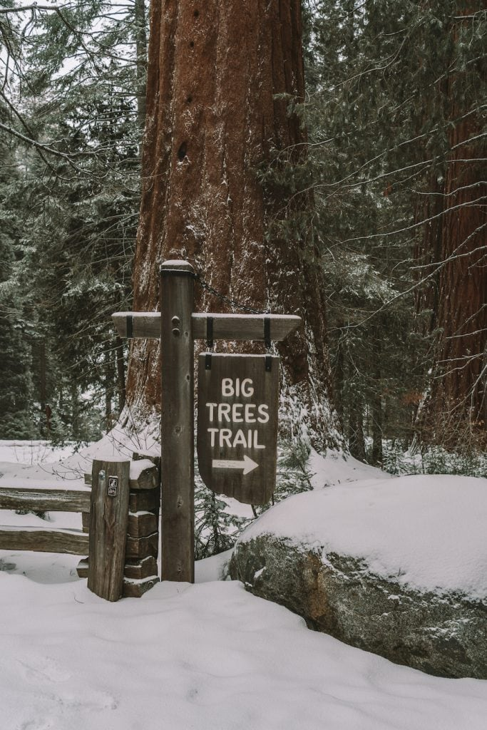 Big Trees Trail sign in Sequoia National Park