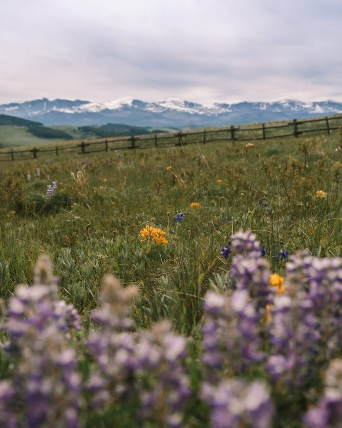 Big Horn National Forest - Salt Lake City to Yellowstone Road Trip