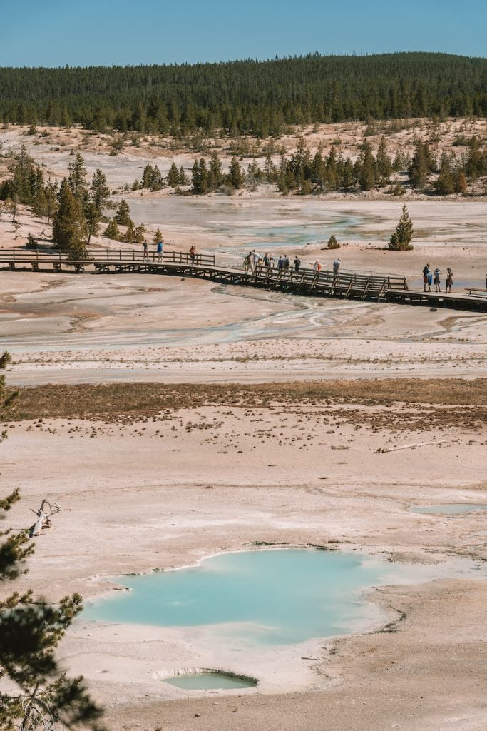 View of the boardwalk and hot springs at Norris Geyser Basin