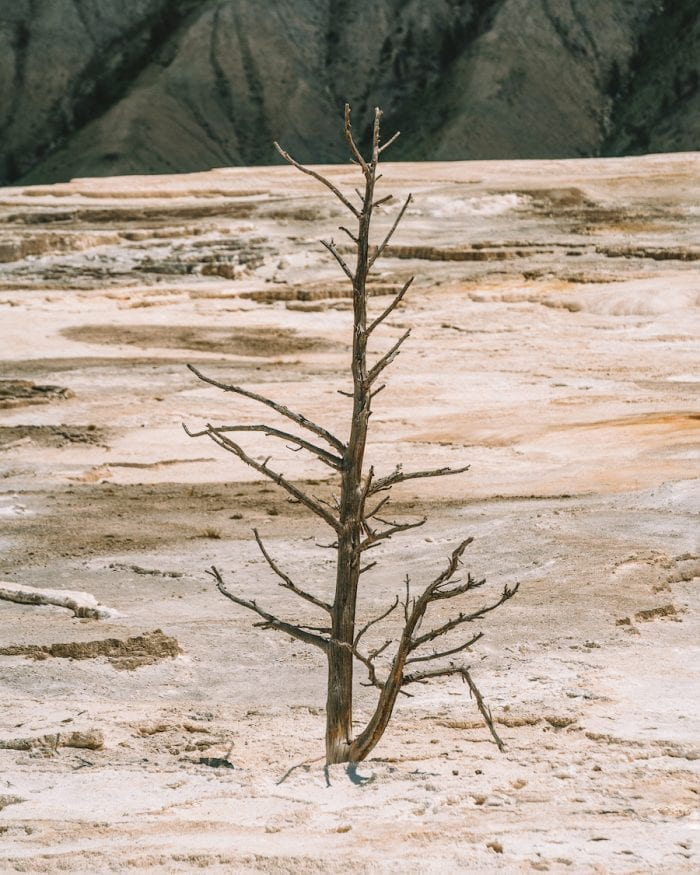 what to see in yellowstone - mammoth hot springs